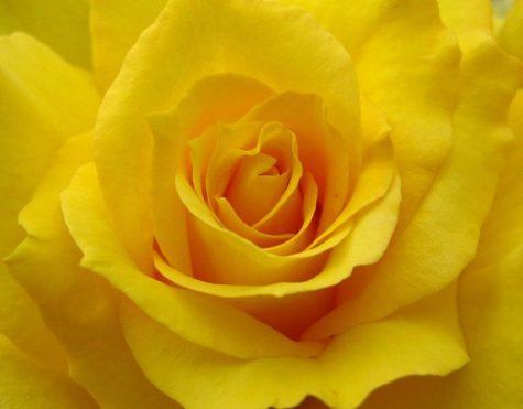 yellow_by_nikema