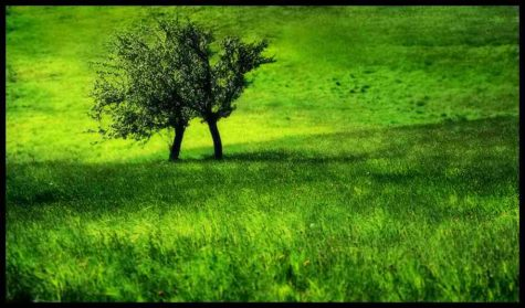 juicy-grass-green-trees-couple-landscape