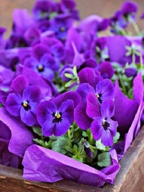 violet-eternal-love-3