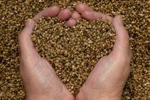 north-cyprus-hemp-seeds-hands-heart