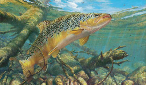 brown-trout-fishing-art1