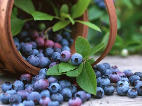 bilberry-1