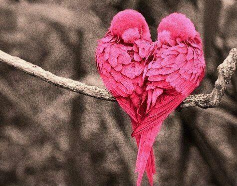 155078-Love-Birds