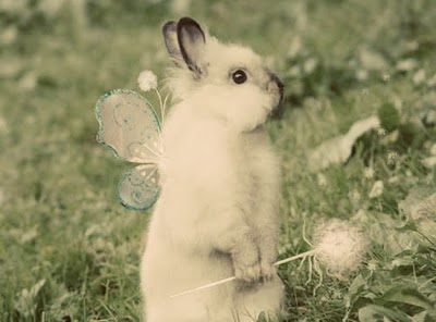 cute-bunny-2