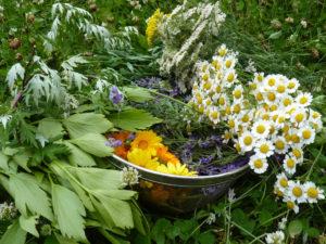 gathered_herbs