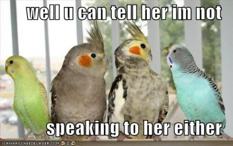 funny-pictures-birds-not-speaking-parrots