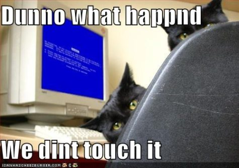 funny-pictures-cats-computer-blue-screen-death