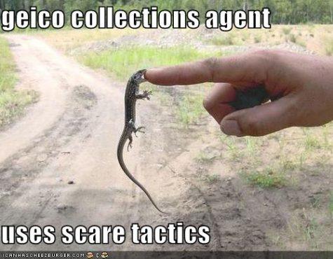 funny-pictures-gecko-bites-finger