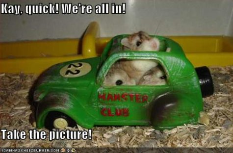 funny-pictures-hamster-toy-vw