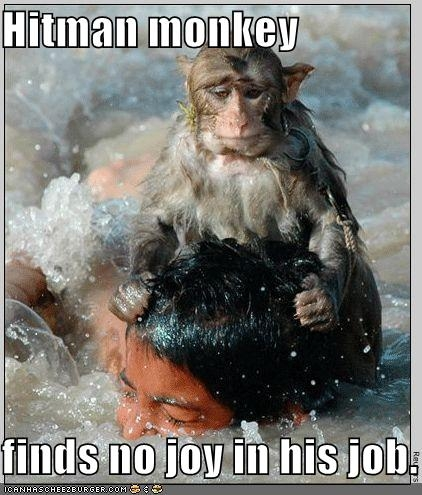 funny-pictures-hitman-monkey-drowns-boy