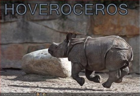funny-pictures-hover-rhino