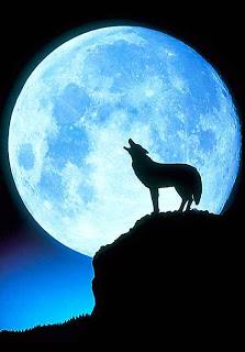 wolfdmp16_468x672