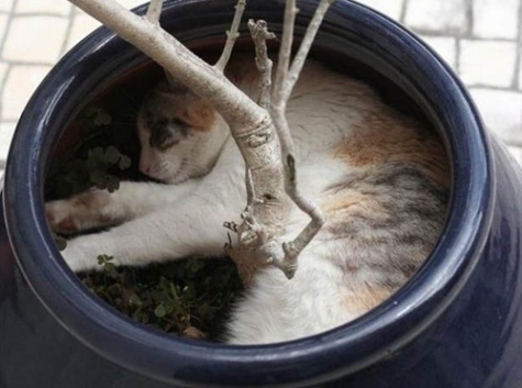 07-cats-caught-sleeping-in-strange-places