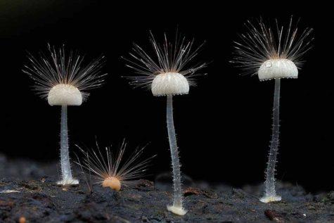 fungi-mushrooms-photography-steve-axford-28
