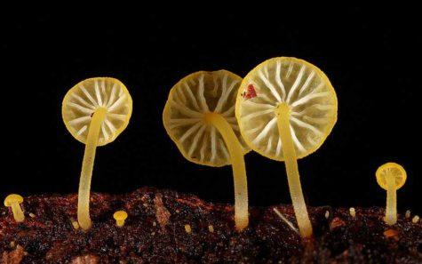 fungi-mushrooms-photography-steve-axford-3