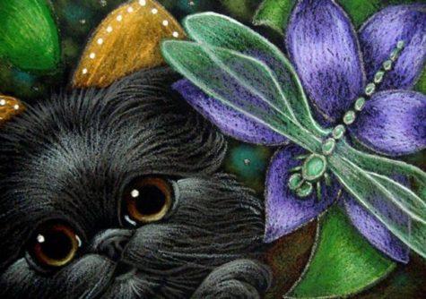 black-fairy-persian-kitten-cat-dragonfly
