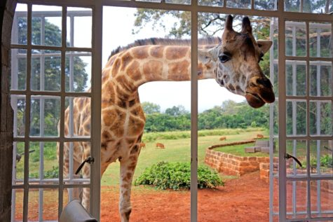 giraffe-manor-in-kenya-10