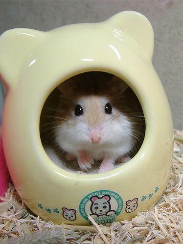 hamster004eo1