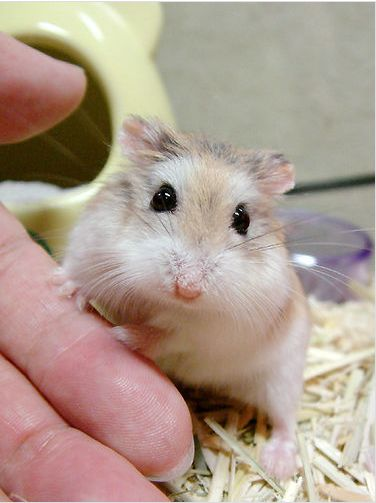hamster008jw7
