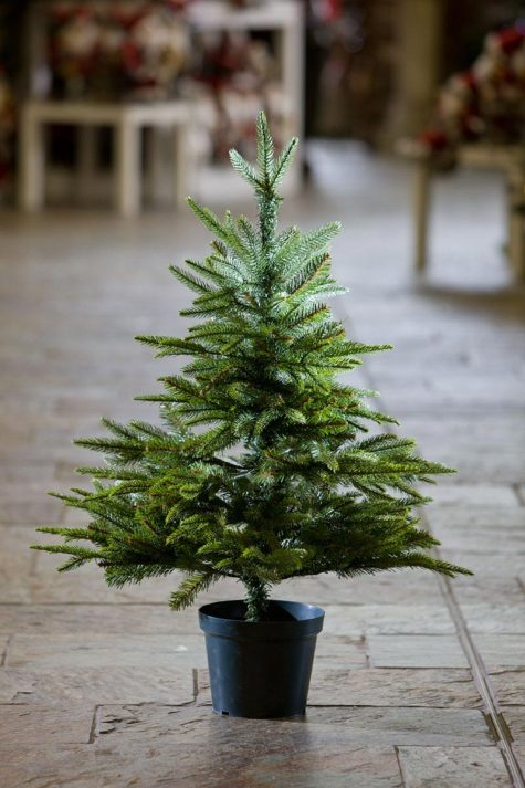 english-pine-potted