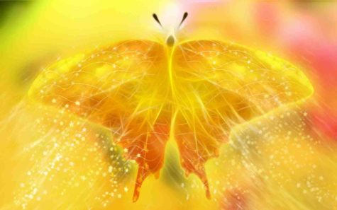 backgrounds-windows-orange-butterfly