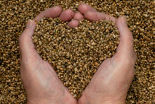 north-cyprus-hemp-seeds-hands-heart