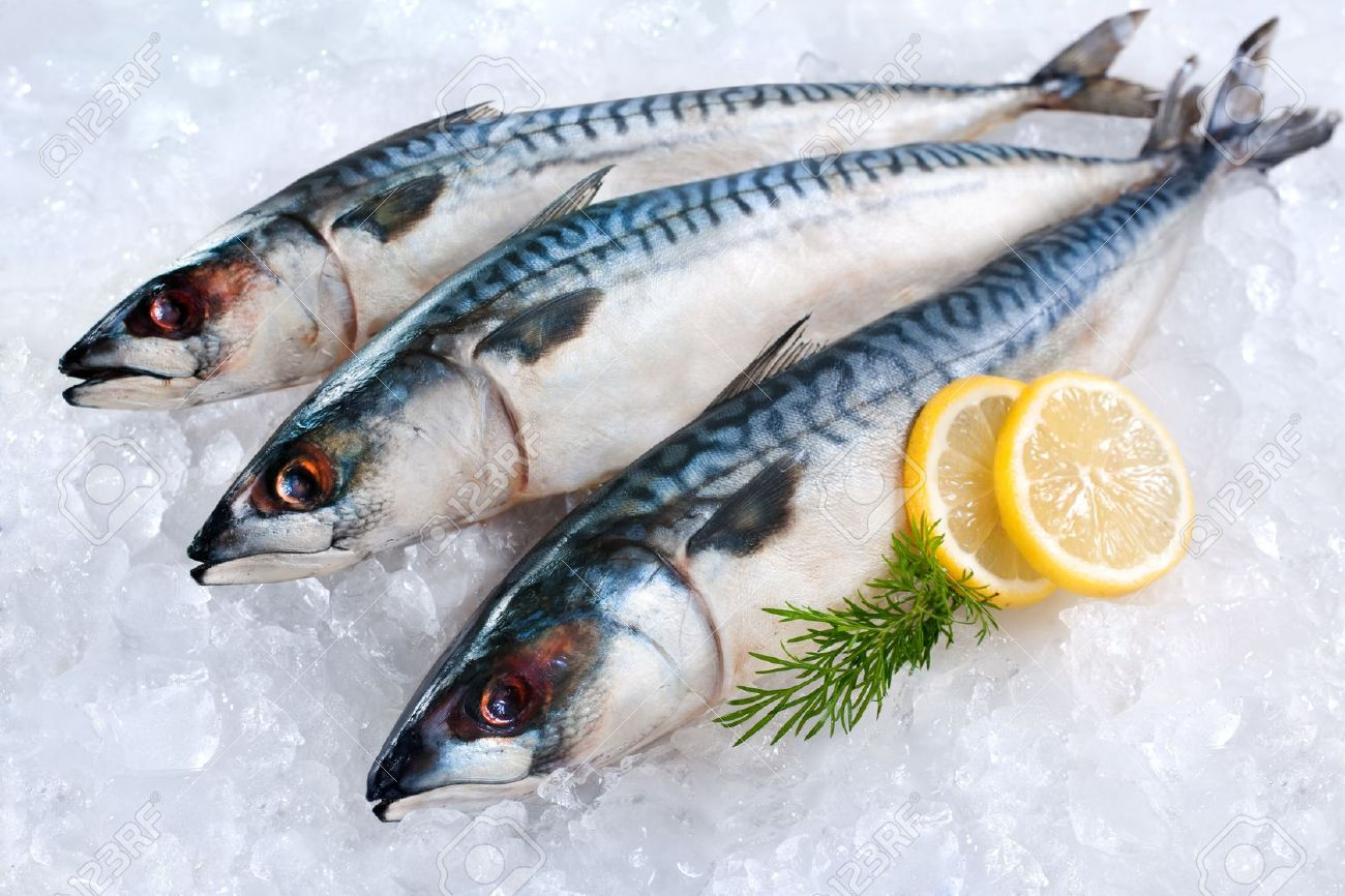 12679982 fresh mackerel fish scomber scrombrus on ice for Best way to freeze fish