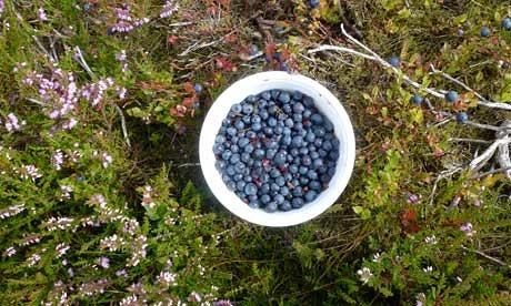 berries-some-winberries-009