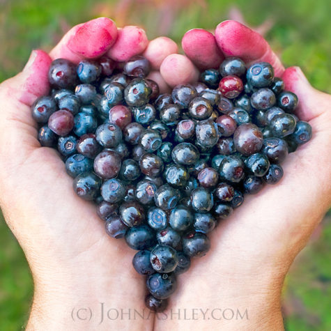 huckleberry-heart-by-john-ashley