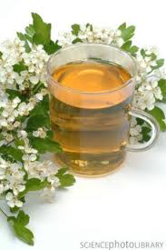 hawthorn flower tea
