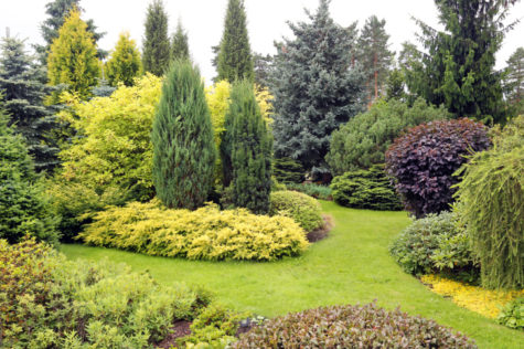garden landscape with variety of conifers and other plants