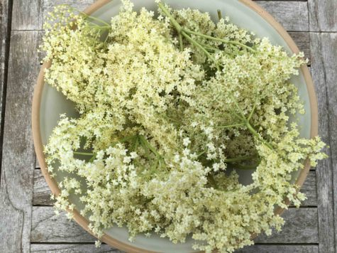 elderflower-5