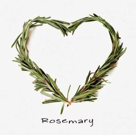 Benefits-of-Rosemary