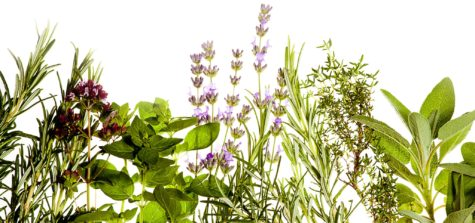 Mediterranean herbs on pure white background: lavender, sage, oregano, thyme. Spring and summer concept. Plenty of copyspace.