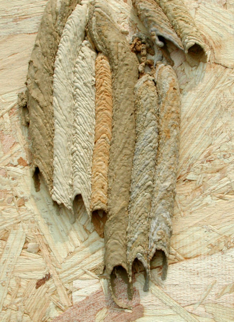 Organ_Pipe_Wasp_nest