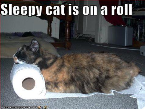 sleepy-cat-is