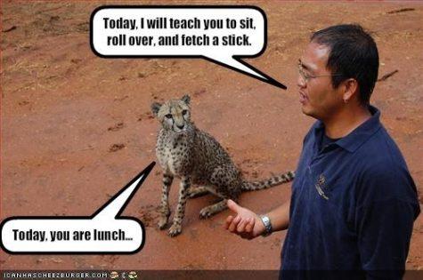 will-teach-you