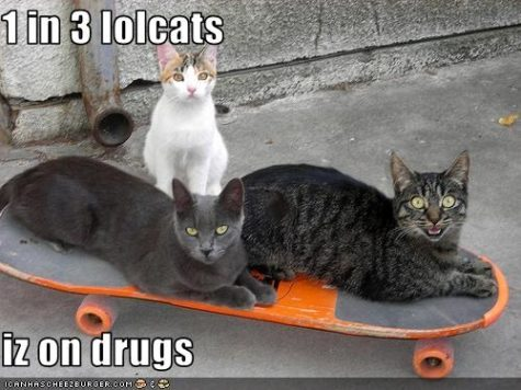 3-lolcats