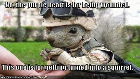 funny-pictures-army-squirrel-shows-off-his-medals
