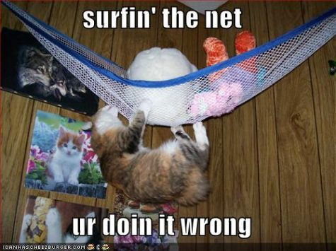 funny-pictures-cat-surfing-net-wrong