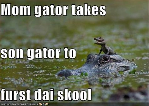 funny-pictures-gators-to-school