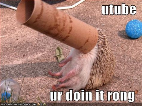 funny-pictures-hedgehog-paper-roll-youtube