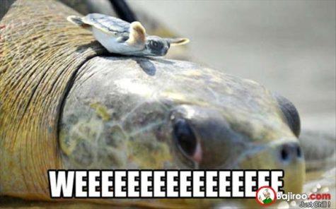 funny-turtles-meme-pics
