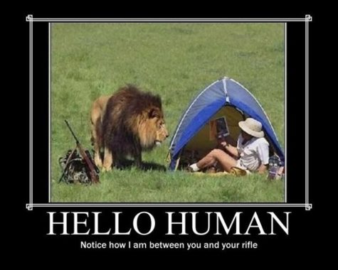 Image result for animal as human meme