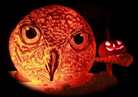 jack-o-lantern-spectacular2