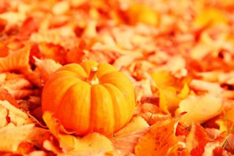 fruit-patch-pumpkin-orange-fall-sign-pie-thanksgiving-8