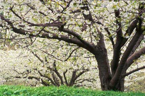 donpaulson-orchard-0