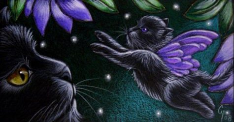black-fairy-kitten-cat-1st-flying-lesson