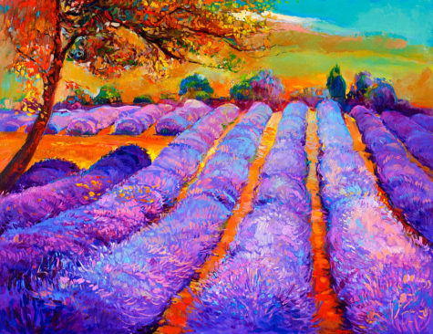 12-lavender-fields-boyan-dimitrov