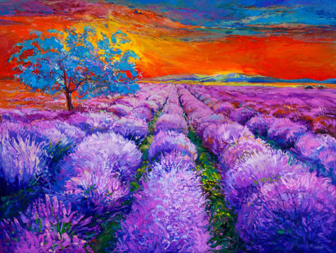 16-lavender-fields-boyan-dimitrov